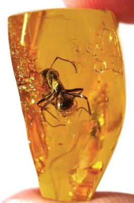A piece of Baltic amber containing an ant
