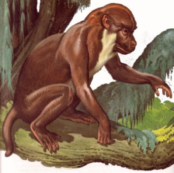 Reconstruction af Aegyptopithecus Zeuxis.