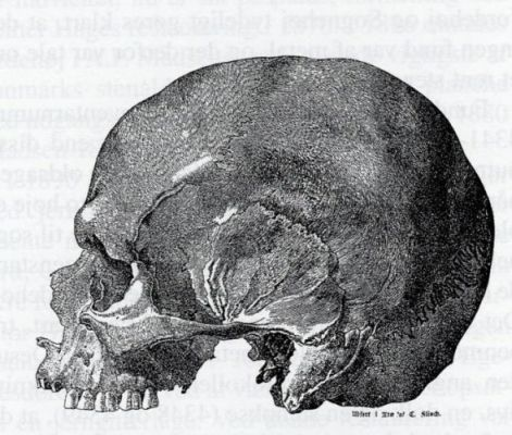 Drawing of skull found in Jordehøj