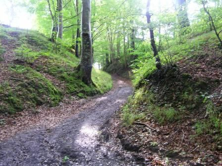 Sunken road at Ajstrup