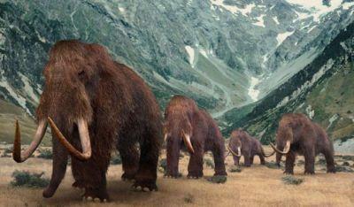 uldhåret mammut