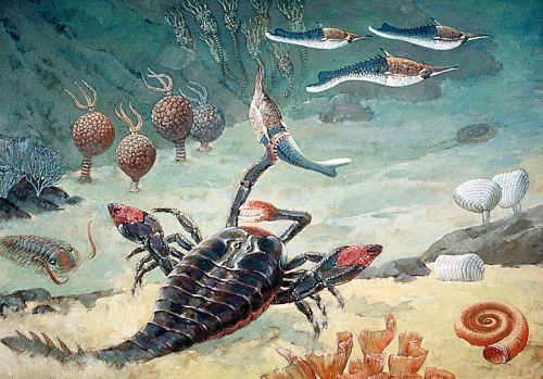 Life on the seabed in Ordovician