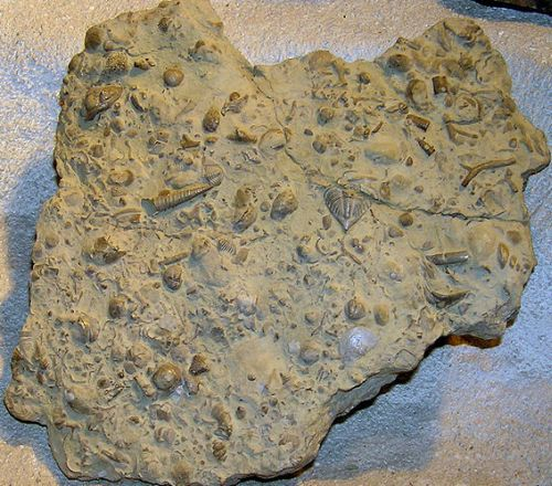 Petrified seabed from Silurian
