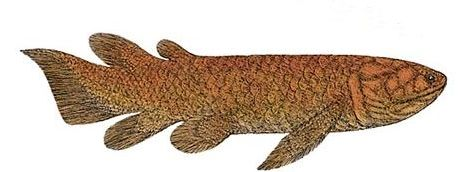 Reconstruction of a lobe-finned fish from Devonian