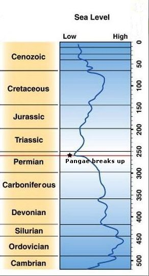 Global sea surface levels in the Phanerozoic