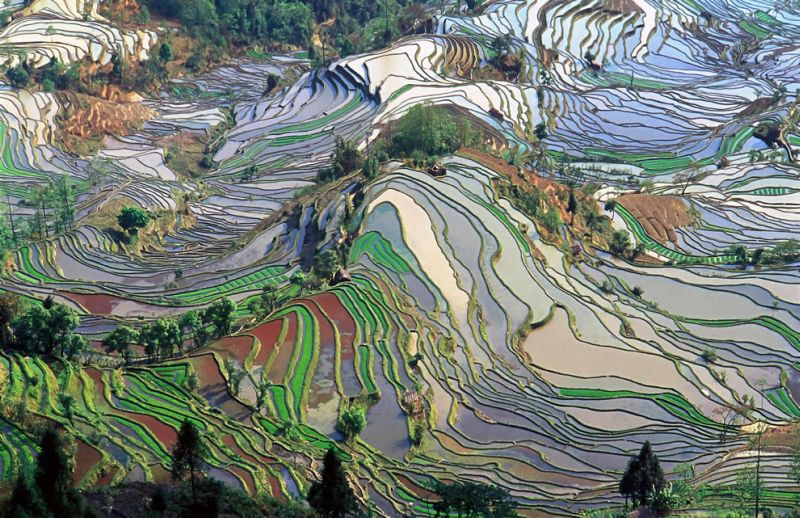 Terraces with rice fields in the province of Yunan in China