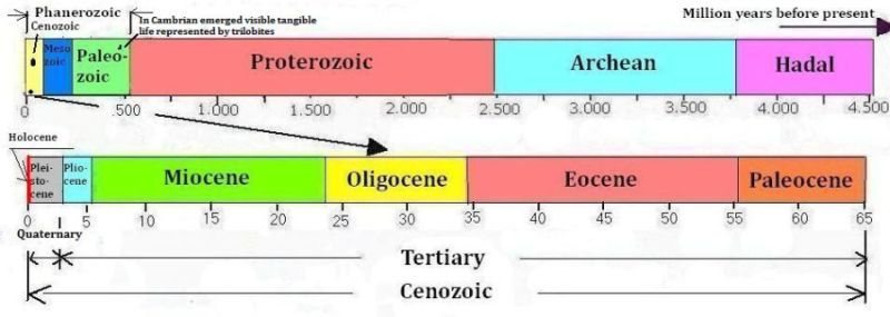 The geological periods in Cenozoic
